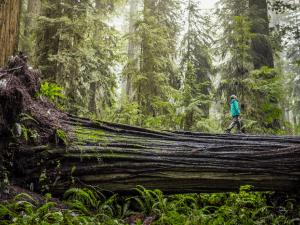 Canadense comprova que as árvores também se comunicam