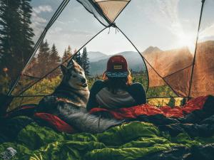 5 perfis no Instagram para quem ama cachorros e aventura
