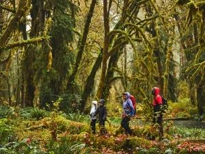 4 dicas para se desconectar e curtir mais a natureza