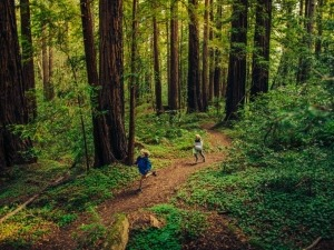 Contato com a natureza ajuda a tratar Déficit de Atenção, diz pesquisa